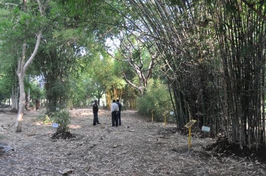 bamboo-garden-dsc_0157